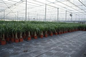 Custers Plants (1)
