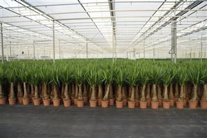 Custers Plants (10)