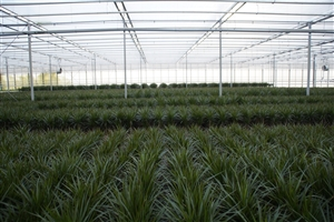 Custers Plants (4)