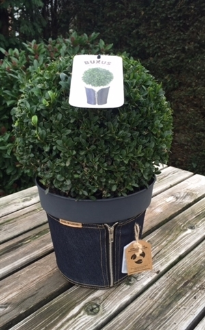 Buxus jeans of Garden antraciet