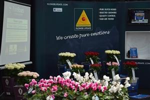 Willeke Blumen 40 Jahr 24 8 13 027