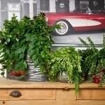 Hordijk Plants
