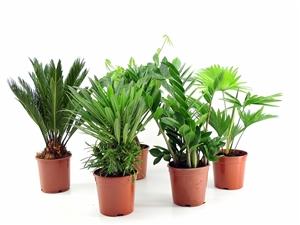 C:\Users\Gebruiker\Documents\growplant afbeeldingen\Foto's klein formaat\IMG 7661
