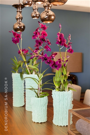 Dendrobium Sa nook Arrangement 020 003