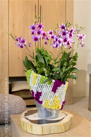 Dendrobium Sa nook Arrangement 020 004