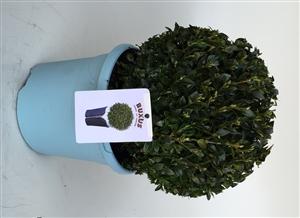 Jeans of garden Bol 23 25 cm
