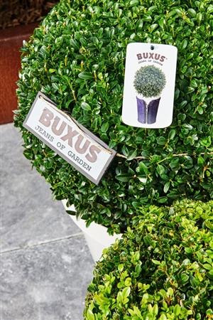 Buxus5019 LR