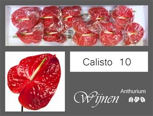 Calisto 10 stuks