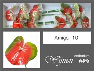 Amigo 10 stuks