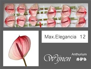 Max Elegancia 12 stuks