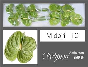 Midori 10 stuks