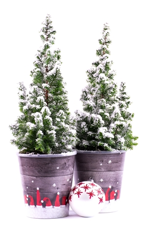 Kerstboom website 0426