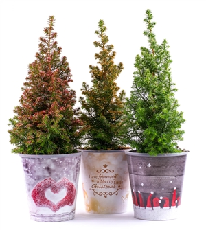 Kerstboom website 0439