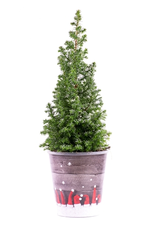 Kerstboom website 0454