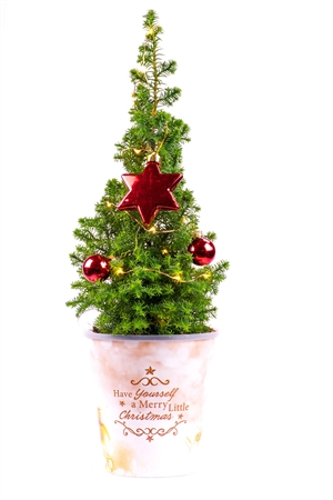 Kerstboom website 0509