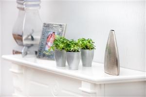 Miniplanten, Hedera