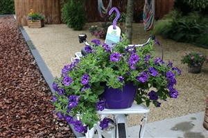 Fiets Petunia Night Sky HP27 (10)