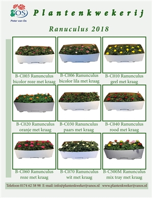 Ranunculus 2018 blz1  kopie