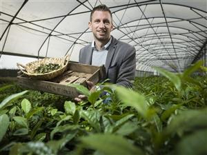 Johan Special Plant