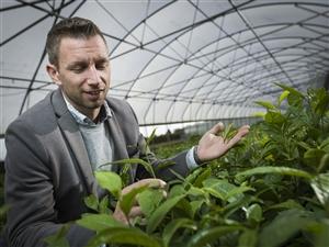 Johan Special Plant 2