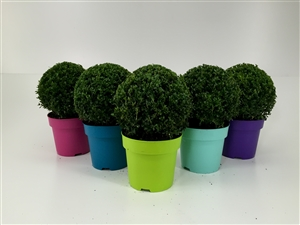 Mix Color Bol 25 cm pot 23