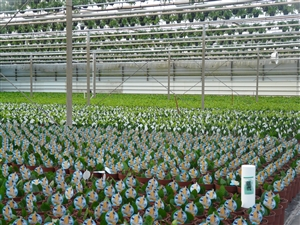 plantagen 2012 001