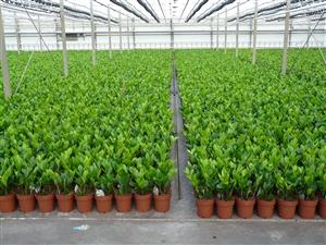 plantagen 2012 002
