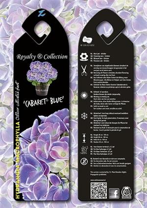 Cabaret Blue