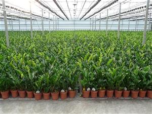 plantagen 2012 004
