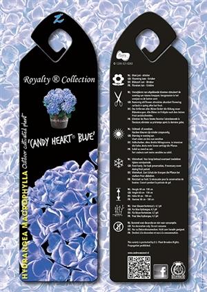 Candy Heart Blue
