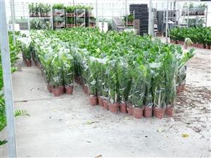 plantagen 2012 008