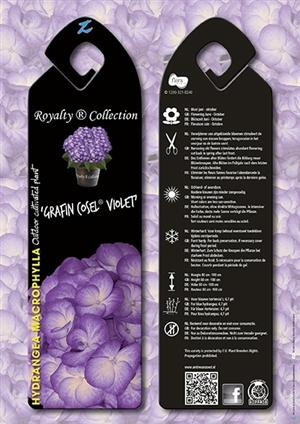 Grafin Cosel Violet