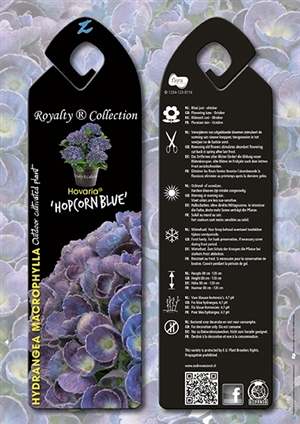 Hovaria Hopcorn Blue