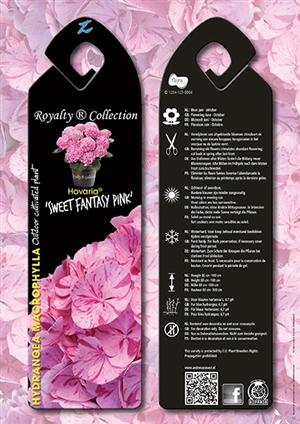 Hovaria Sweet Fantasy Pink