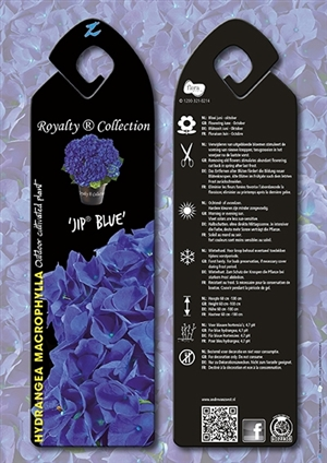 Jip Blue