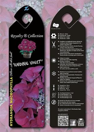 Kardinal Violet