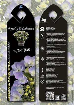 Lutin Blue