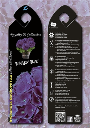 Ningbo Blue
