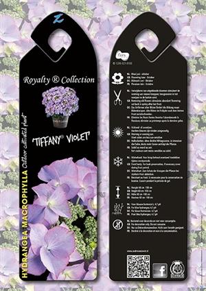 Tiffany Violet