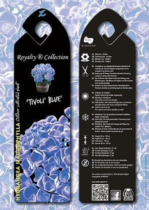 Tivoli Blue