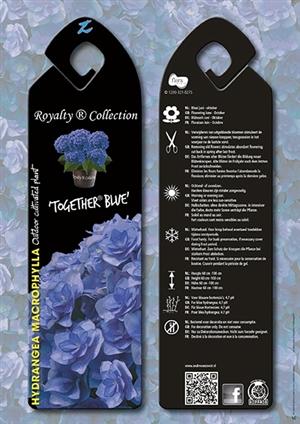 Together Blue