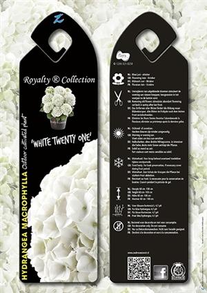 White Twenty One