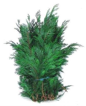 conifeer blauw groen 5 kg pak