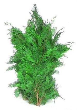 conifeer groen 5 kg pak