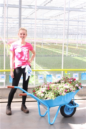 Blooming joy collega ( Kwekerij Baas)