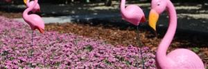 Pink kisses veld ( Kwekerij Baas)