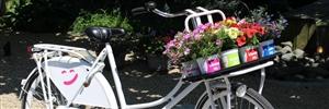 Blooming joy fiets ( Kwekerij Baas)