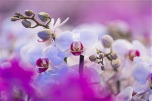 2017 10 26 Pannekoek Orchidee shoot 31