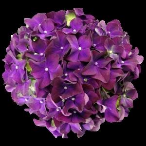 PurpleRomance sortsvisning 630x630 w300 h300 i