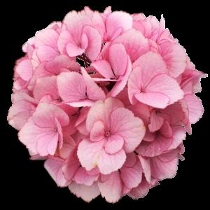 PinkTwilightDream sortsvisning 630x630 w300 h300 i